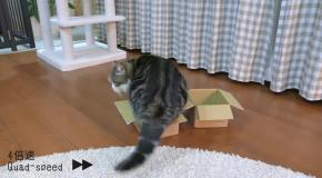 Одной попой на 2 коробки