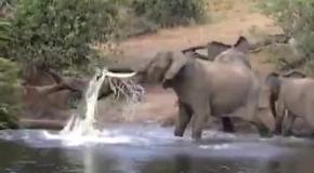 Схватка крокодила и слона