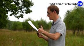 Мясорубка школьного образования (Познавательное ТВ, Артём Войтенков)