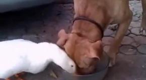Пес съел весь общак
