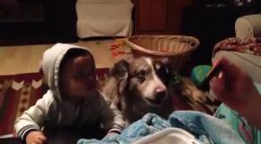 Ребенок и собака учатся говорить мама