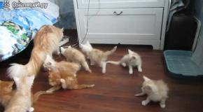 Кошка-мать нарушила покой в семействе
