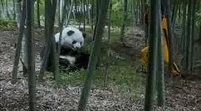 КУНГ-ФУ Панда!!!