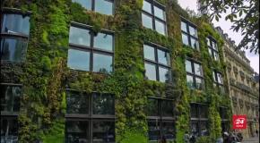 Дерева на дахах та овочеві грядки на терасах: фото і відео міста майбутнього