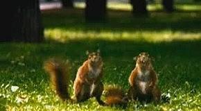 ...орехи стали ещё больше !!!