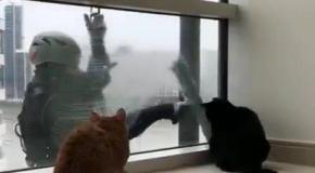Коты и мойщик окон