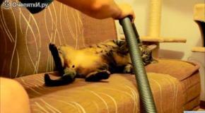 Кот обожает пылесошение