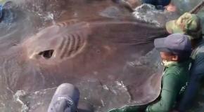 Невероятные монстры пойманные на рыбалке
