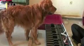 Пес с совершенным слухом
