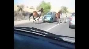 Конь протаранил встречное авто