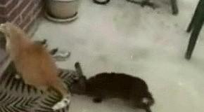 Кролик-факер