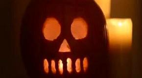 Деликатес на Хэллоуин: живой тарантул