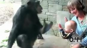 Дикие звери и дети в зоопарке
