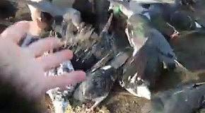 ПОКОРМИТЕ птиц--пришла ЗИМА!