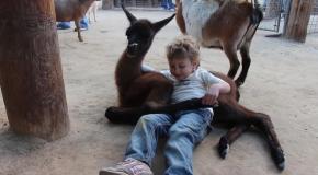 Ревнивая коза