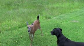 Кто бы мог подумать, что собака найдет себе такого друга