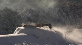 Поезд едет по снегу