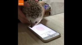 Ежик-хакер вскрывает мобильный телефон