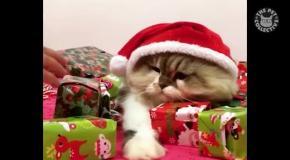 Кот на охране рождественских подарков