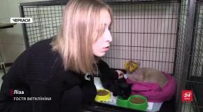 Кототерапія  в Черкасах: ветклініка запрошує пообіймати тварин