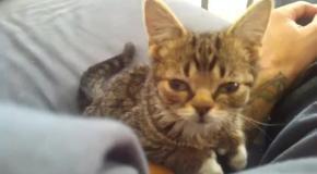 Сонная кошечка Лил Баб