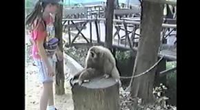 Обезьяна эксплуатирует девушку