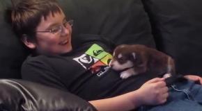 Новая порция мимишности: щенок маламута учится петь