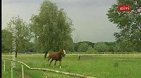 Історія з хепі-ендом. Коня Ратібора ледь не відправили на м'ясокомбінат