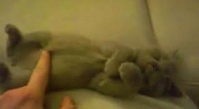 Видео с животными - Спящий котенок