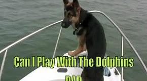 Собака так хотела подружиться с дельфинами!