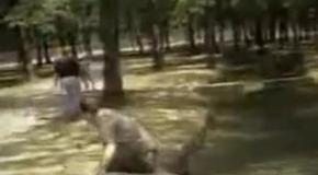 Альпака атакует репортера