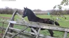Конь-неудачник