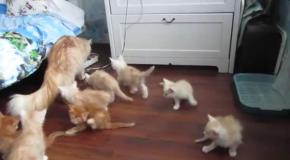Кошка напугала своих котят.