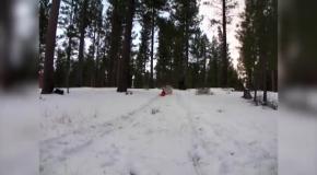 Когда собаки впервые видят снег...