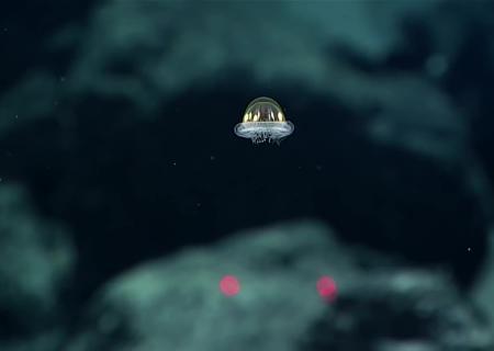 Вюжной части Тихого океана отыскали «медузу-НЛО»