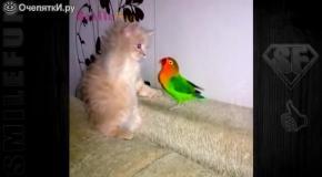 Смешные попугаи и коты