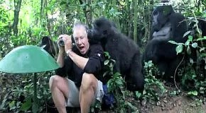 Первое знакомство горил с человеком