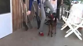 Кто учит козочек скакать