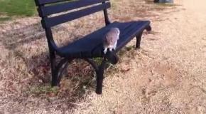 Белка атакует камеру