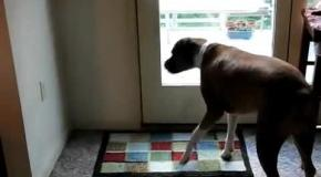 funny animal open doors compilation