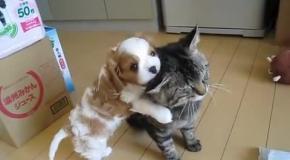 """Кот """"воспитывает"""" щенка"""
