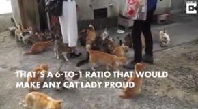Остров котов в Японии