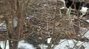 """Кот бежит к """"столовой"""""""