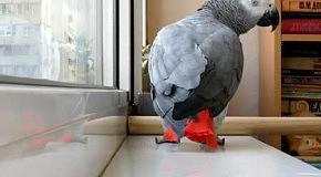 прикольный попугай.