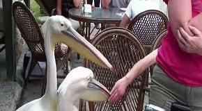 Навязчивые птицы