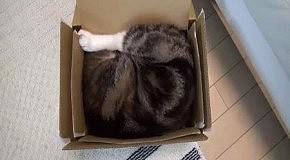 Коллекция коробок Мару