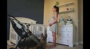 Вся беременность за 90 секунд