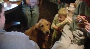 Малыш обманул собаку