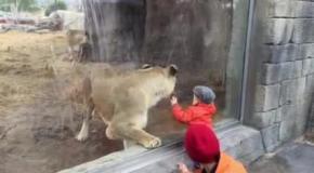 Что делает эта львица