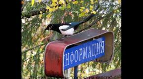 Леонид Минаев - сорока на хвосте